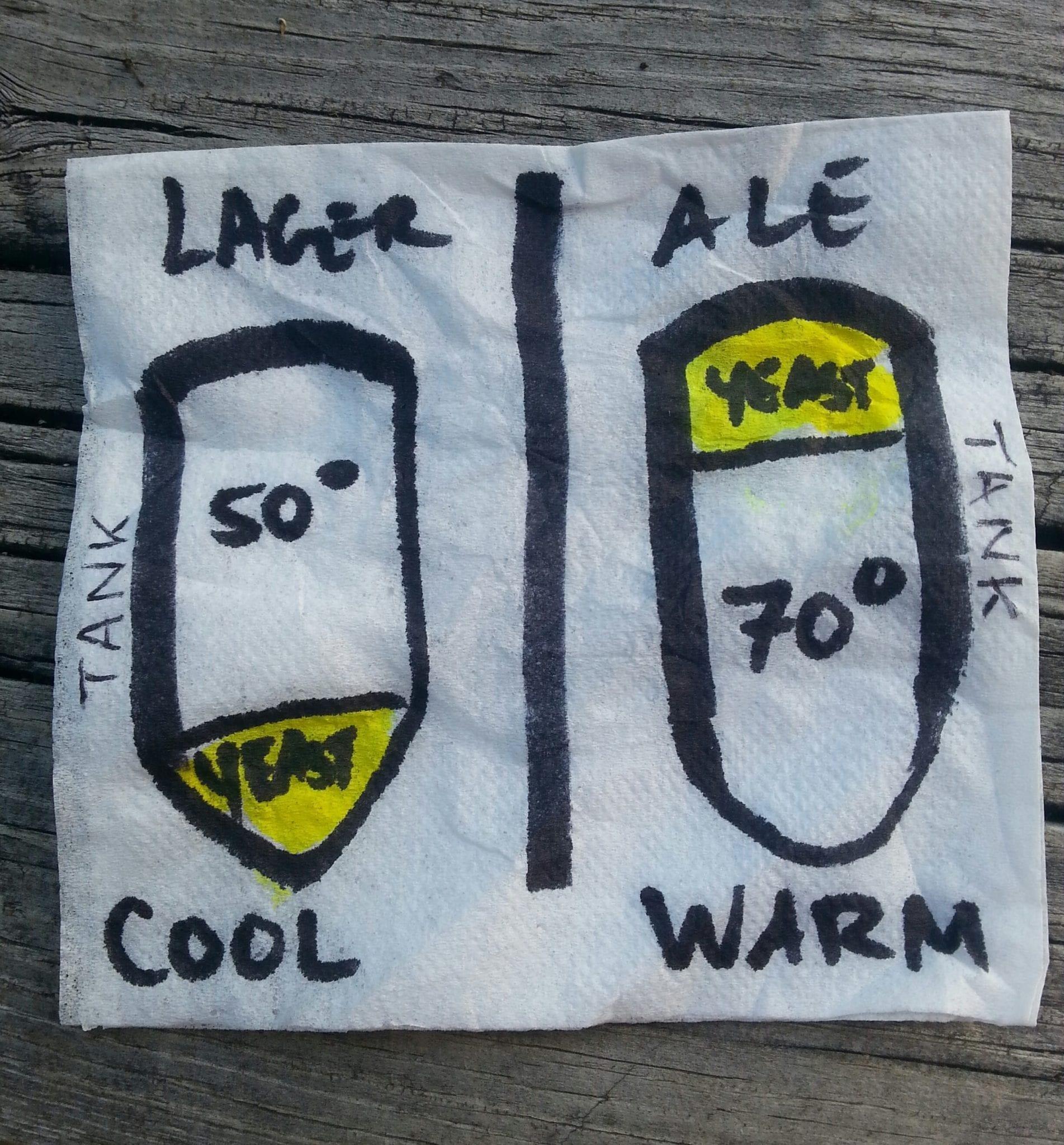 Lager vs Ale Fermentation
